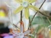 Frühjahr & Ostern (74)